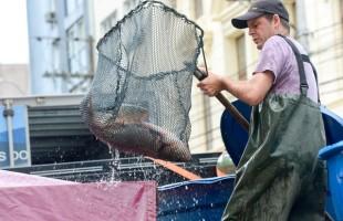 Quarta edição da Feira do Peixe Vivo ocorre nesta sexta-feira