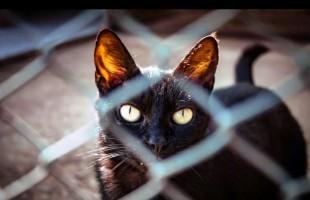 Peludos | Gatil do Canil Municipal será transferido para novo espaço
