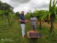 Produtor de Pinhal da Serra investe na produção de pitaya