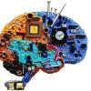 Semana Nacional do Cérebro ganha programação na UCS