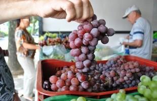 Venda de uva em praças de Caxias do Sul inicia hoje