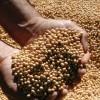 Safra de grãos de verão no RS apresenta boas produtividades