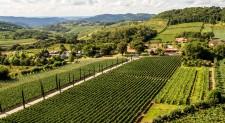 Enoturismo na Serra Gaúcha está entre as atrações da Wine South America