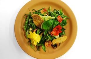 Na culinária, Receita de salada de PANCs para os dias quentes