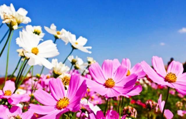 primavera-a-estacao-da-fertilidade-das-chuvas-e-das-cores-5
