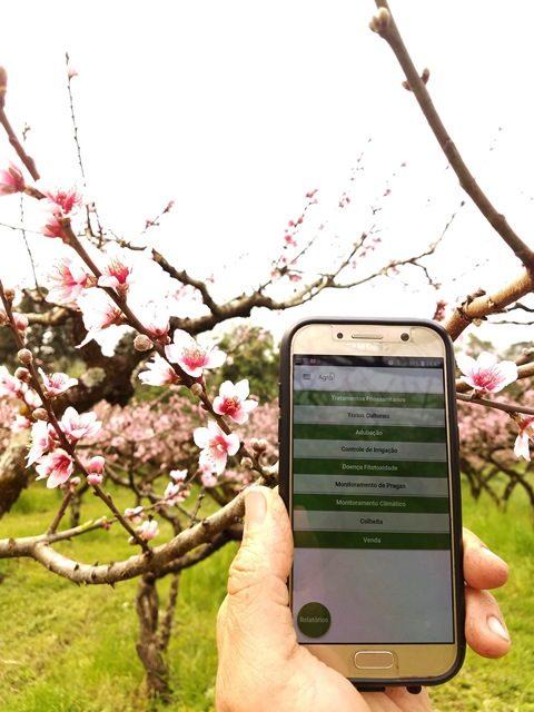 Uso do aplicativo tem auxiliado produtores no manejo em todas as etapas - Crédito: Tauê Hamm