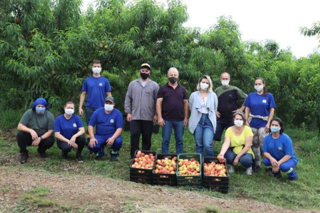 Fazenda Souza - Colheita de Pêssegos - Crédito Rodrigo Rossi
