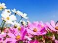 Artigo | Primavera está aí e as alergias também