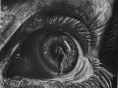 Artista mirim Léo Corrêa realiza sua primeira exposição na Feira do Livro