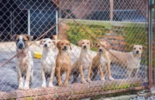 Secretaria do Meio Ambiente recupera cães e gatos para que possam ser adotados
