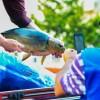 Segunda edição da nova Feira do Peixe Vivo registra aumento de 35% nas vendas