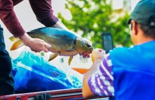Terceira edição da Feira do Peixe Vivo ocorre na próxima sexta-feira