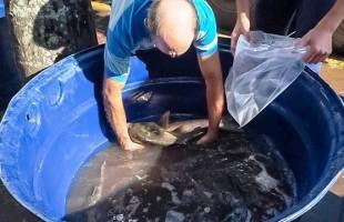 Feira do Peixe Vivo registra venda de 800 quilos na Praça Dante Alighieri