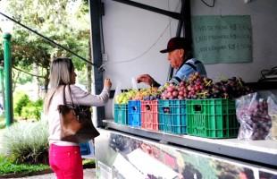 Venda de uva nas praças de Caxias do Sul ultrapassa 22 toneladas