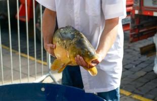 Feira do Peixe Vivo comercializa 350 quilos na edição do mês de junho