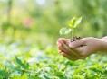 Respire fundo: o meio ambiente agradece