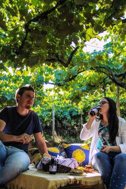 A sombra dos parreirais é um dos espaços para degustar o piquenique orgânico - Foto Lúcia Fávero Moraes
